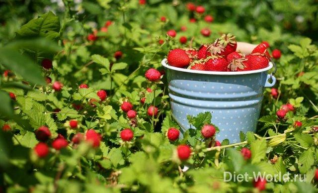 Лето - сезон витаминов.