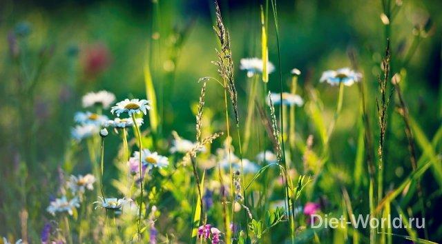 Лекарственные растения для женского здоровья.